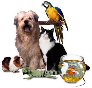 Menebak Kepribadian Dari Binatang Peliharaannya